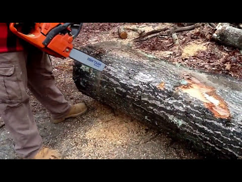 How powerful is a Husqvarna chainsaw? The Rancher 450 put to the test!