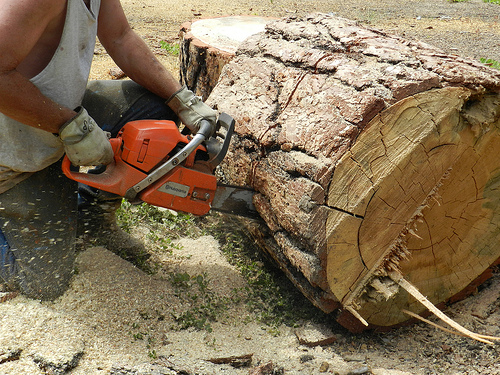 best chainsaw for cutting firewood, best chainsaw for firewood, best firewood chainsaw