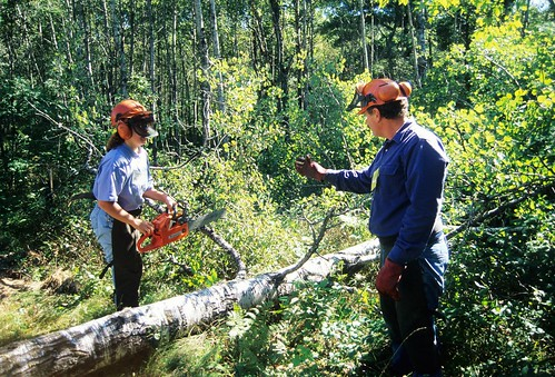 best chainsaw for women, smallest chainsaw, chainsaws for women