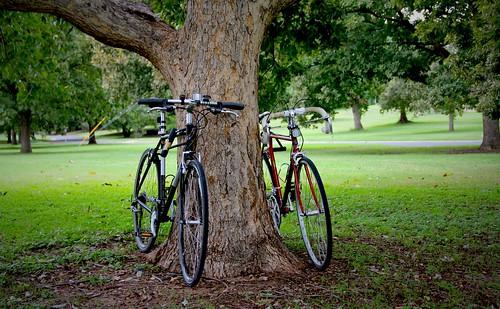 bike rack for rockwood tent trailer, forest river rockwood bike rack, bike rack for rockwood pop up camper, rockwood bike rack